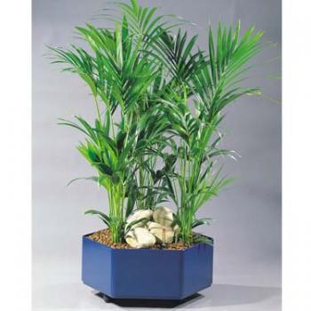 Kentia Palme im Kunststoffgefäß