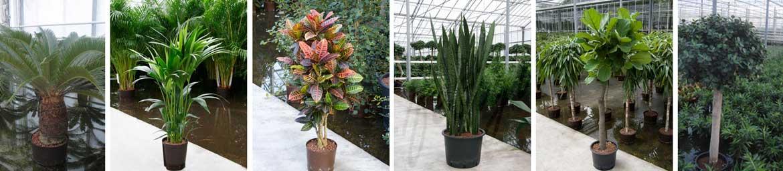 Hydrokultur Pflanzen Ohne Erde Hydroshop24 Alles Für Hydrokulturen